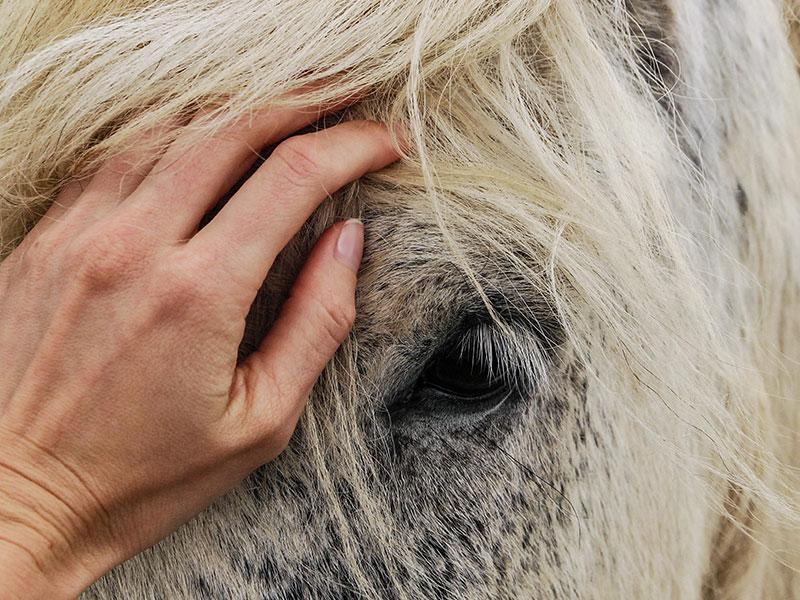 Mens en dier samen naar herstel nieuws